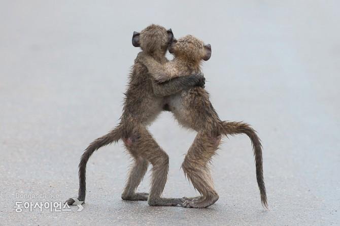 (c)Tony Dilger/Comedy Wildlife Photography Awards 제공
